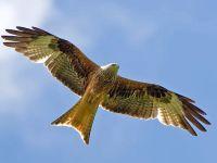 123 Ptaki Drapieżne Lekcja Testy Wiedzy